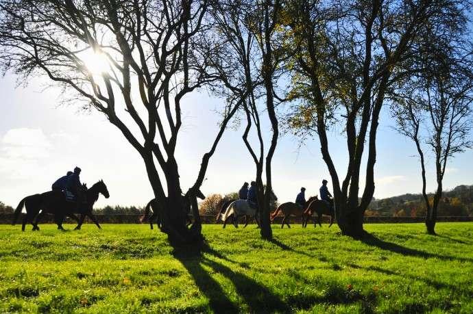 generic riding horses